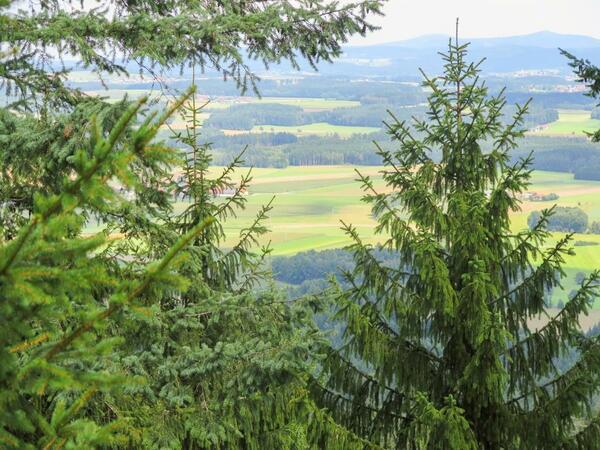 Bild vergrößern: Waldlandschaft am Schwarzwihrberg