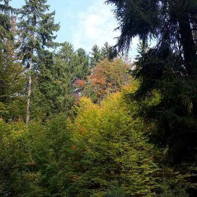 Bild vergrößern: Zukunft Mischwald
